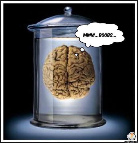 Brain in Vat